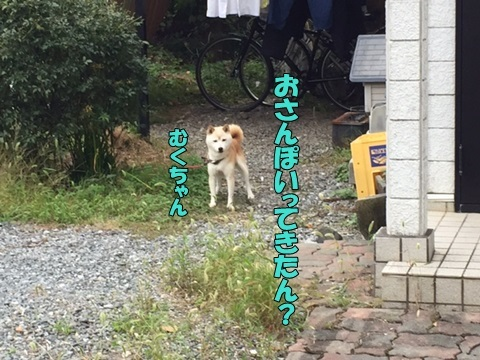 image518101502.jpg