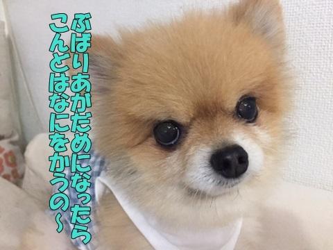image618092901.jpg