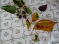 ナンフェア ドングリ 落ち葉