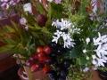 ナンフェア 秋の花