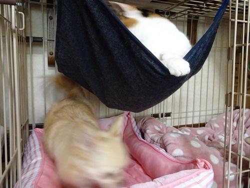 あられ&柚子