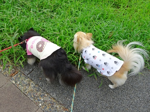 ナッツ&柚子