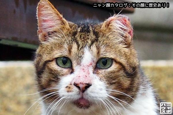 ニャン顔NO170 サバトラ猫さん