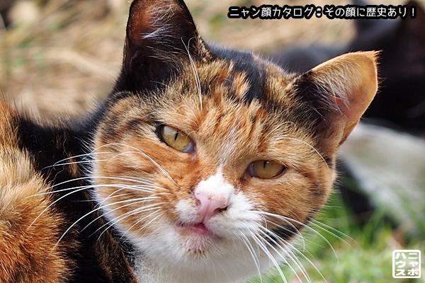 ニャン顔NO171 三毛猫さん