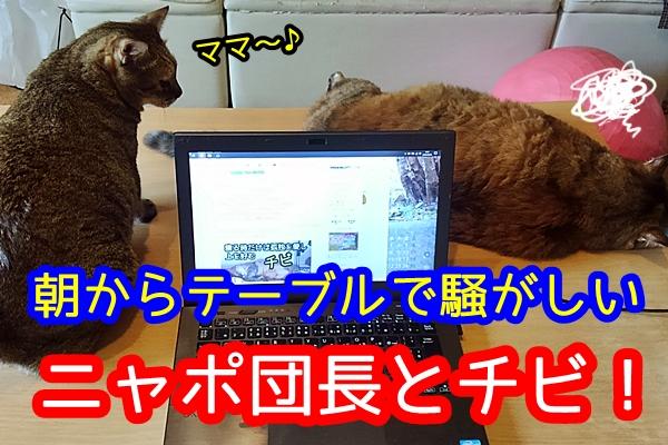 テーブルの上 猫