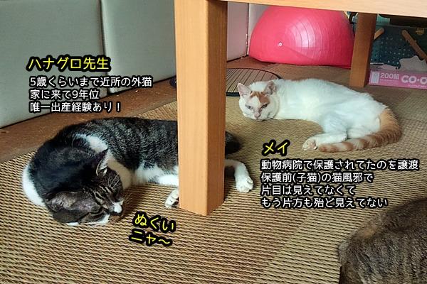 猫 ニャポ軍団