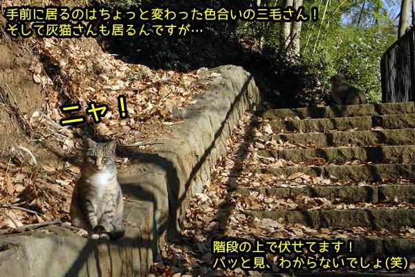 猫 保護色