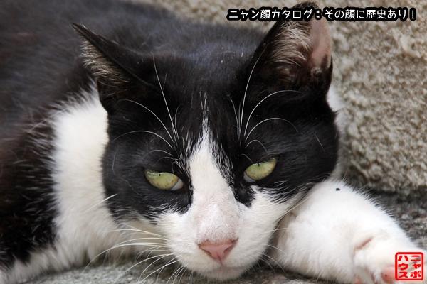 ニャン顔NO172 白黒猫さん