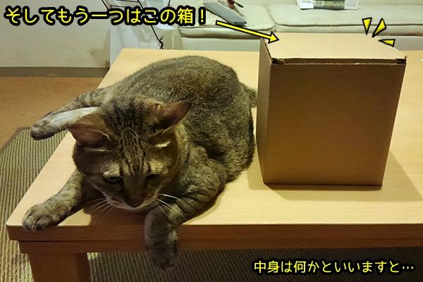 蚊取り線香入れ 猫