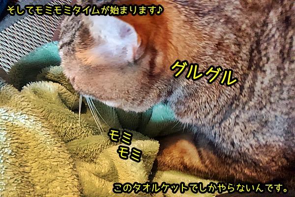 猫 もみもみ ふみふみ