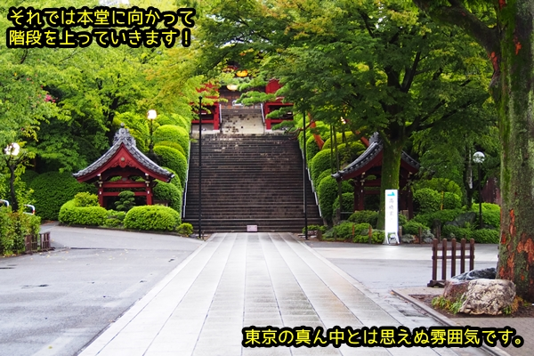ニャポ旅54 護国寺 1