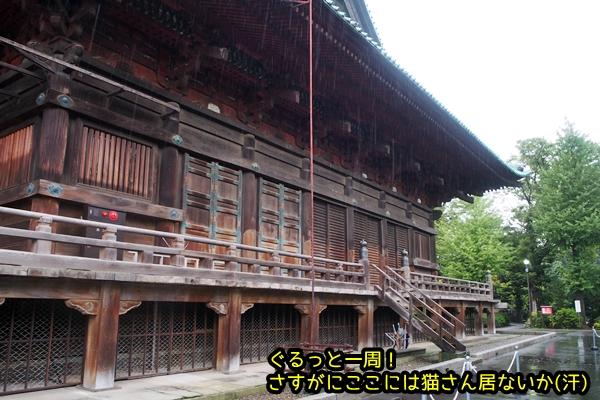 ニャポ旅52 護国寺 その2