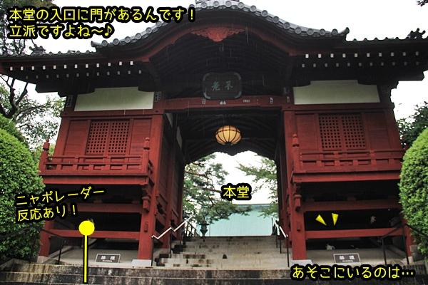 ニャポ旅54 護国寺 その3