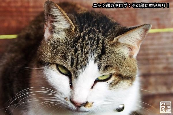 ニャン顔NO169 サバトラ猫さん