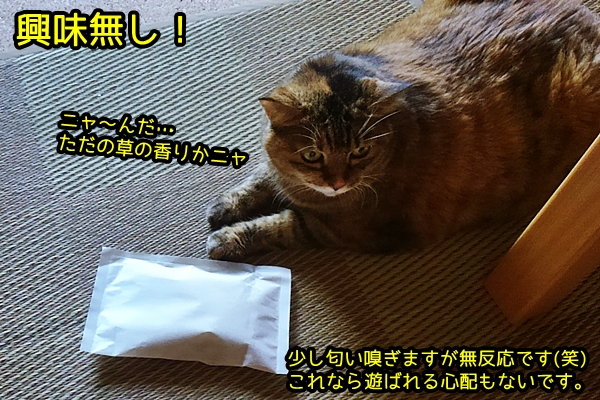 ベチバー 猫 vetiver
