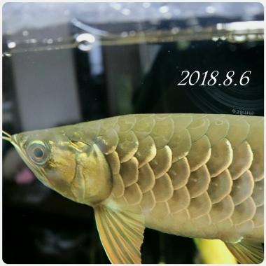 20180806_135307.jpg