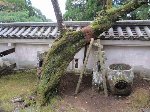IMG_8394桜伐採(支柱)