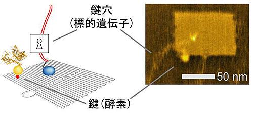 ナノシート上に集積型遺伝子回路