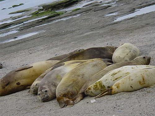 海の哺乳類に有機リン系農薬による危機