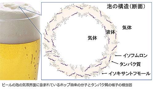 ビール表面の分子と泡の安定性に相関