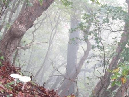 180929鈴ヶ岳 (7)s