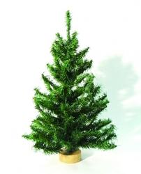 Tree-1 / CR-01