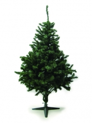 Tree-6 / CR-06