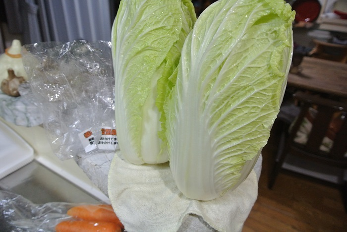 循環型農法白菜