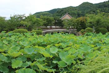 arashiyama1806.jpg