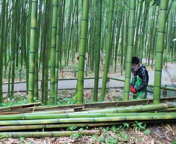 arashiyama1810.jpg