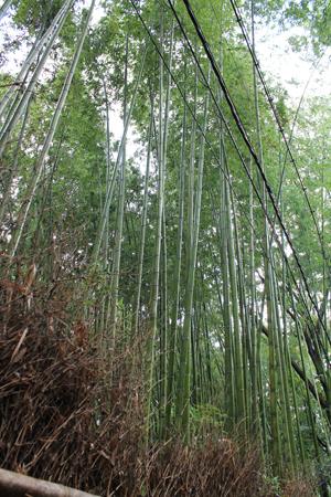 arashiyama1812.jpg