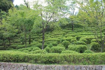 fushimi1811.jpg
