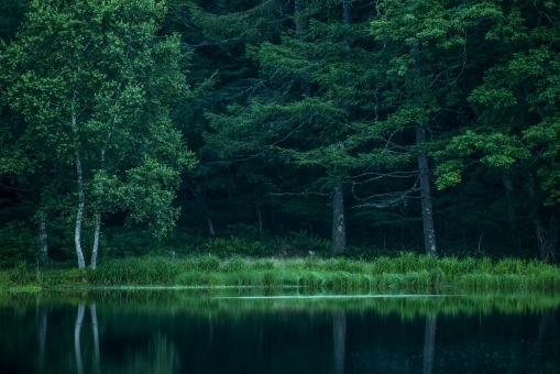forest387368.jpg