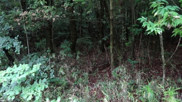 forest638768.jpg