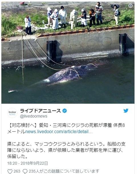 【前兆】愛知県の三河港に8メートルの「マッコウクジラ」が浮かんで漂着しているのを発見…10月からは深部探査船「ちきゅう」が南海トラフの深部まで掘り進めます。