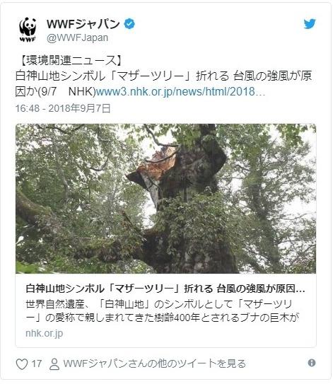 【御神木】青森県・白神山地にある「マザーツリー」の幹が折れる…台風21号による影響か