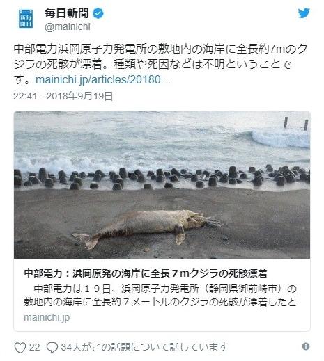 【東海地震】静岡県の浜岡原発敷地内に「クジラ」が打ち上がっているのが見つかる!