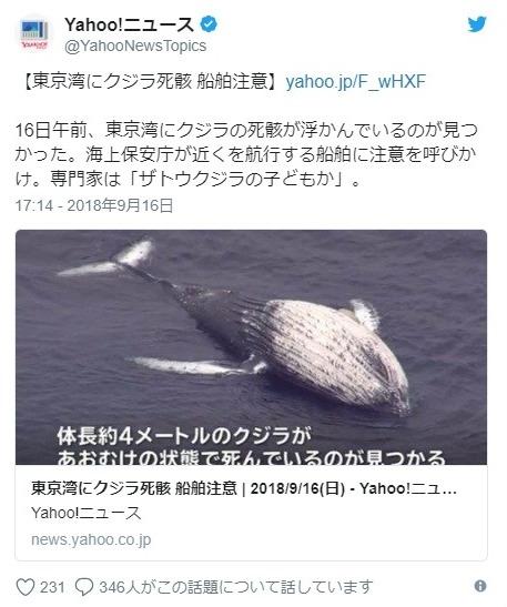 【関東】東京湾に体長4メートルの「クジラ」の死骸が浮かんでいるのを発見!