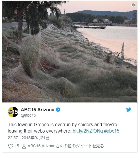 【ギリシャ】大量の「クモの巣」が町覆う…住民たちからも驚きの声