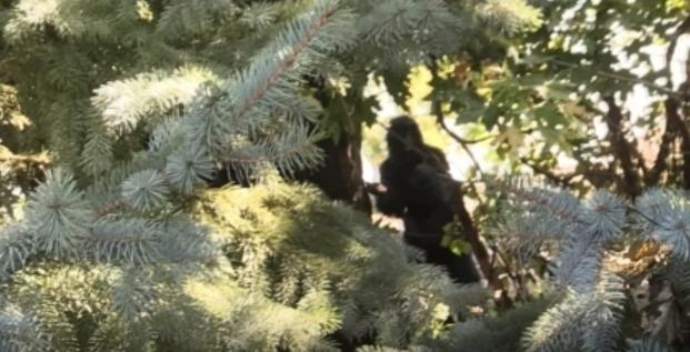 【イエティ】アメリカのミシガン州で3メートル近くある「ビッグフット」の鮮明な姿の撮影に成功!