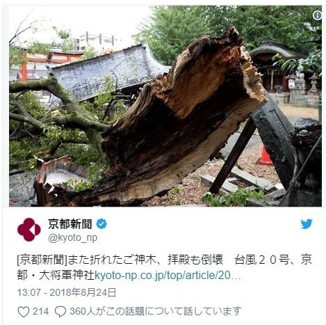 【台風20号】京都の東山区にある「大将軍神社」の御神体である「モチノキ」が倒れ、拝殿に直撃し倒壊
