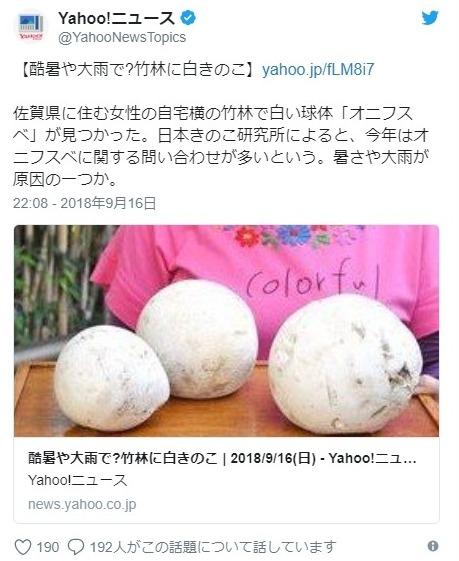 【オニフスベ】竹林に複数の不思議な「白い球体」があるのを発見!酷暑や大雨の影響か?その正体がこれです