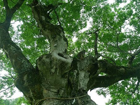 tree687687689.jpg