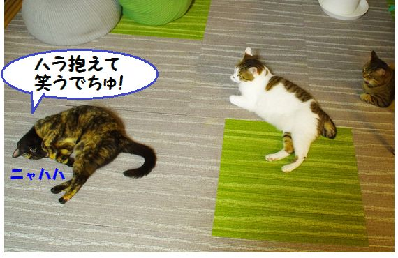 猫会議②@