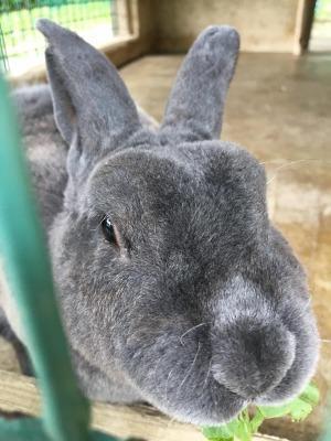 前沢SAのウサギさん2