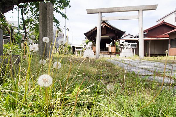たんぽぽと神社