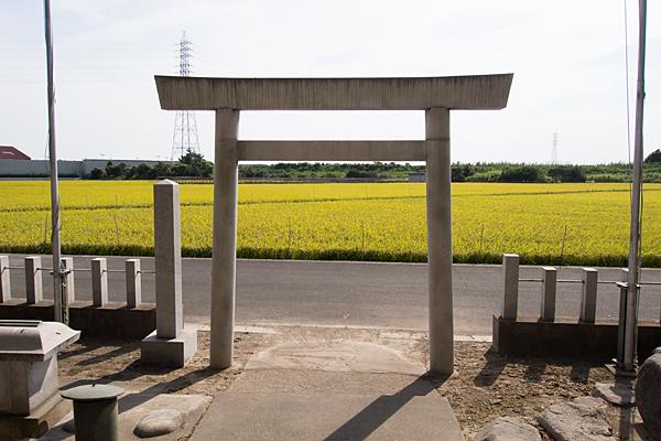 新茶屋秋葉社鳥居と田んぼ