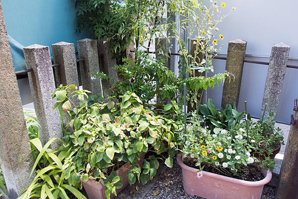 白壁秋葉宮境内の植物