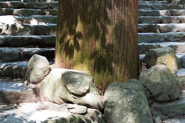 杉の木と階段