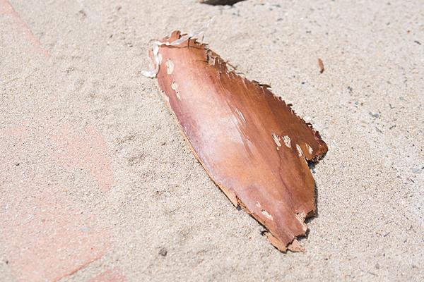 砂浜の木肌